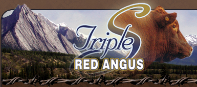 Triple S Red Angus company